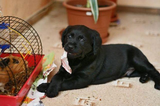 Amitriptyline pour chiens 2