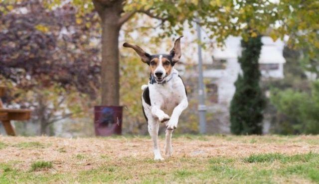 Vers le bas! Comment arrêter inapproprié chien saut