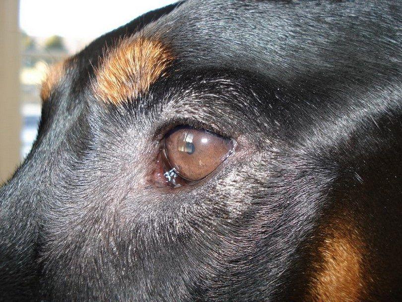 Sécheresse de la peau autour des yeux