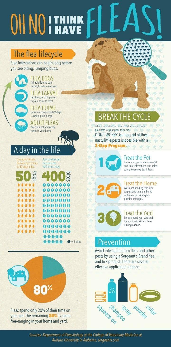 Fleas infographique