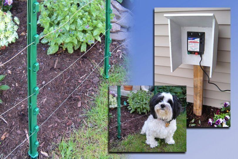 Clôture électrique pour les chiens