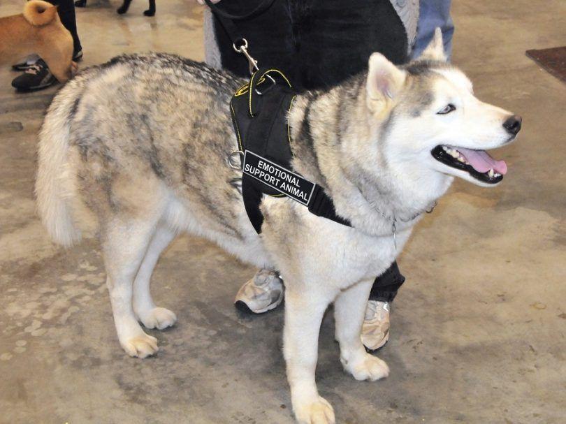 lois émotionnelles de chien de soutien: la protection de vos droits