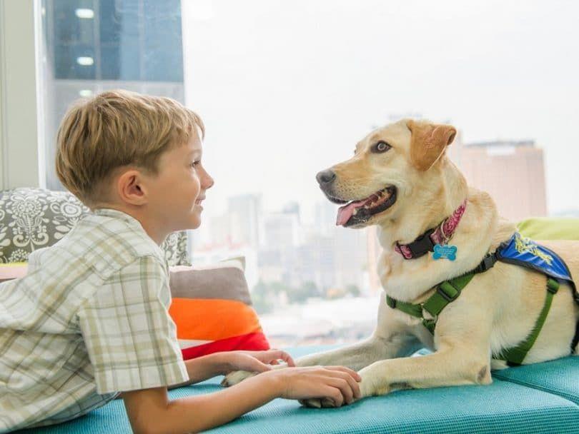 Emotional animal de soutien avec un garçon