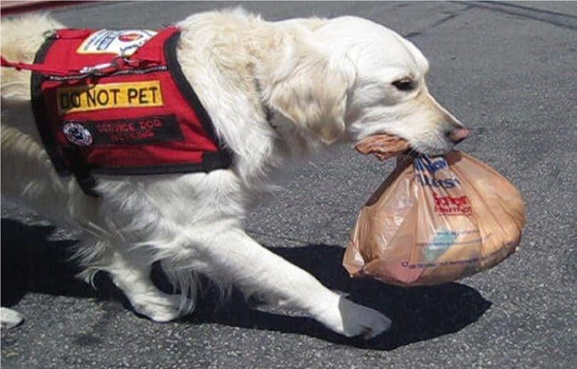 Dog service aidant