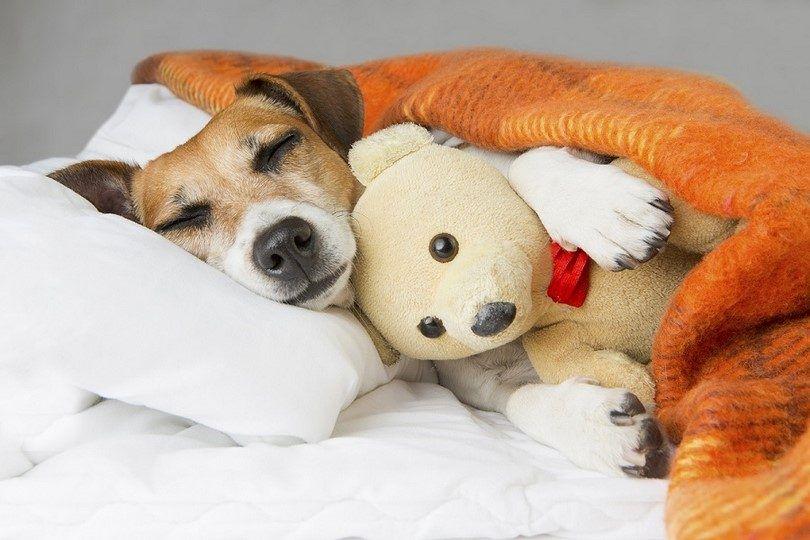 Traitement pour chien avec des problèmes cardiaques