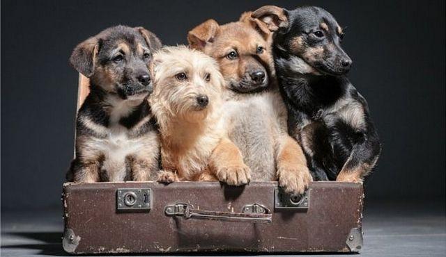 chien Essential règles chaque propriétaire doit vivre