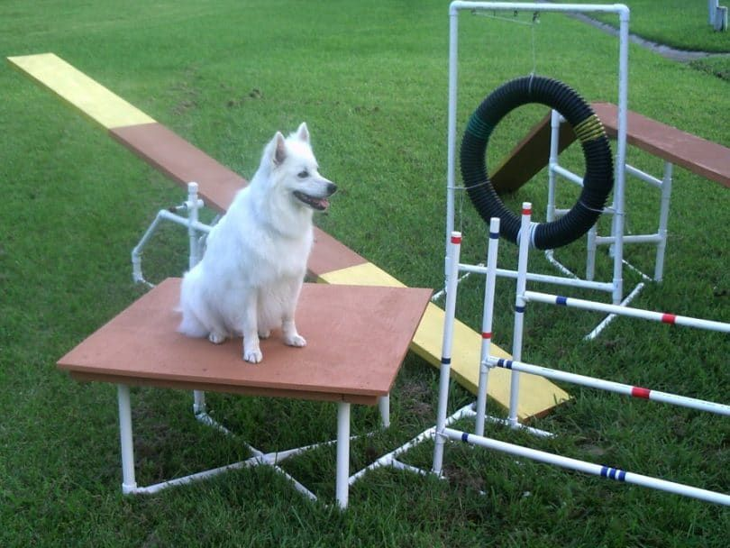 Dog Agility Construction Equipment