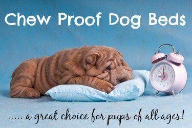 Trouvez le lit de chien parfait chewproof