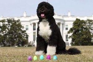 Première bo chien débute le rouleau easter egg maison blanche