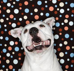 la loi de Floride protège les victimes de la cruauté canine