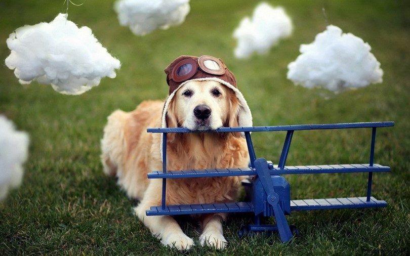 Voler avec un chien: un Guide de Voyage pour le meilleur ami de l`homme