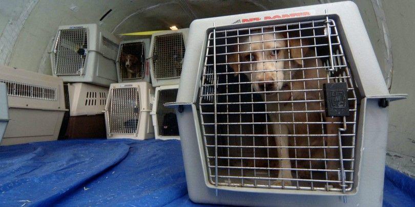 Avion Voyage avec chiens