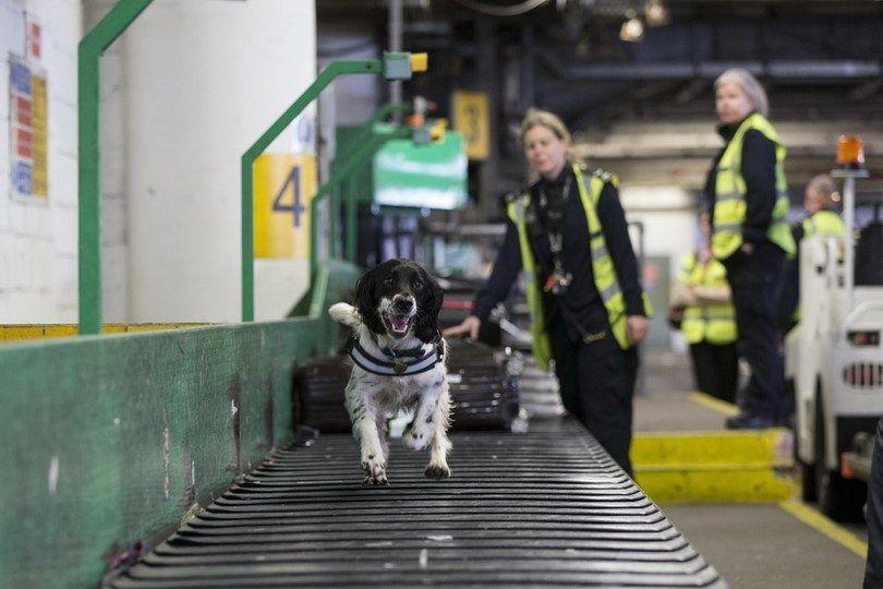Dog à l`aéroport