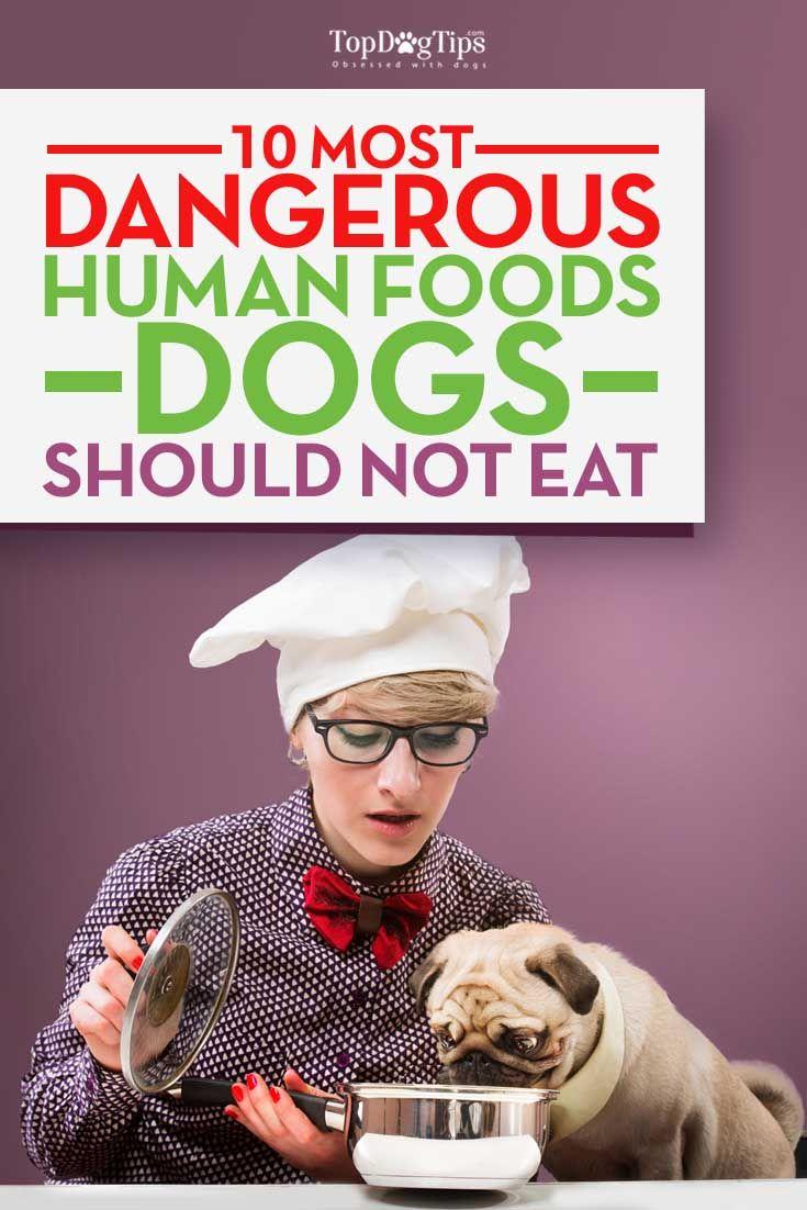 Foods humaines qui sont dangereux pour les chiens