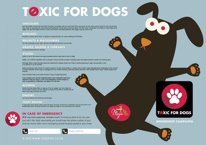 Toxique pour les chiens