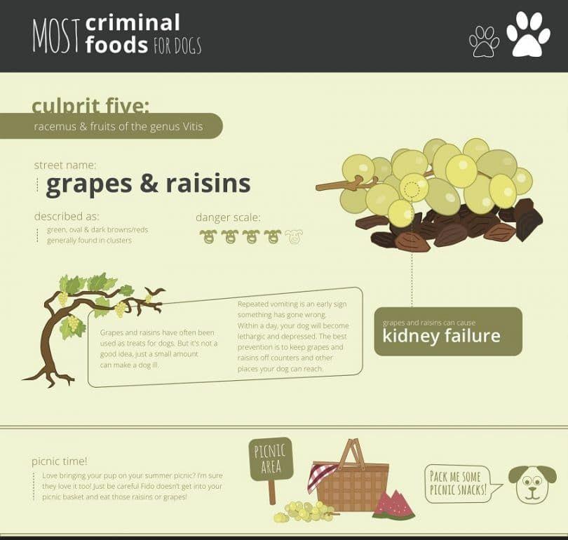 Les raisins et les raisins secs