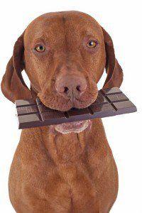 Aliments chiens ne doivent pas manger - Chocolat