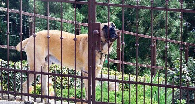 Aller dans sans une morsure: comment entrer sur le territoire d`un chien