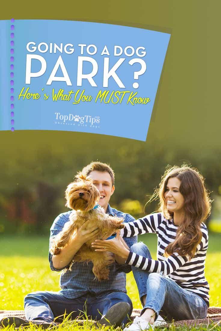 Aller à un parc de chien pour la première fois - Connaître Cette