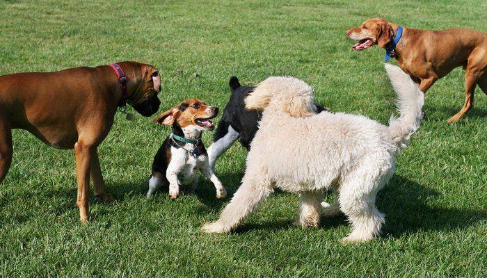 Aller à un parc de chien pour la première fois