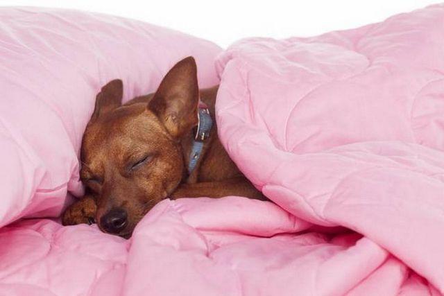 Bon dogzzzzzz: comment obtenir un chiot à dormir toute la nuit