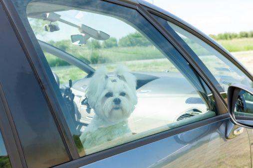 Bons samaritains en Floride peuvent maintenant pénétrer dans les voitures chaudes pour sauver les chiens