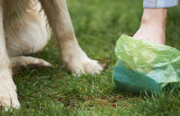 Gouvernement Says déchets Dog Sacs Aren`t as Green as Advertised