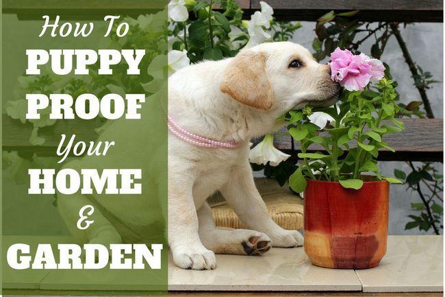 Guide de chiot épreuvage votre maison et le jardin