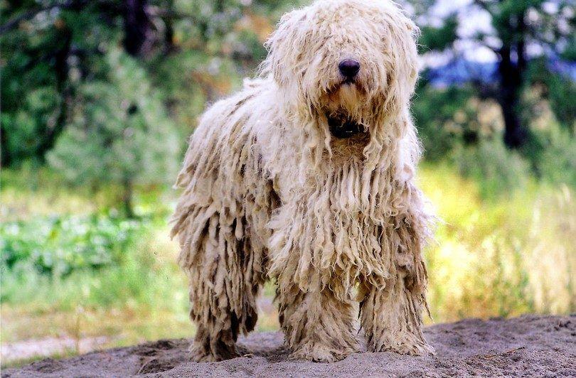 Hairballs chez les chiens: comment faire face à ce problème félin