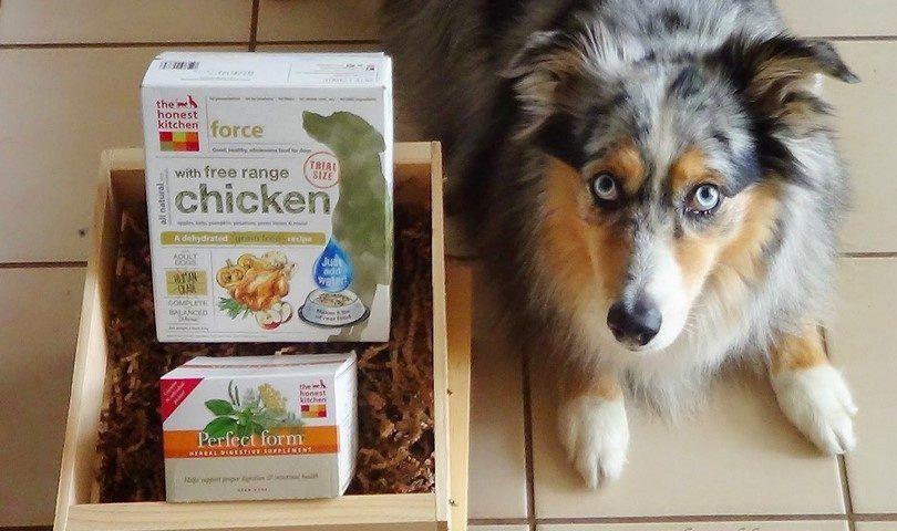 Healthiest marques d`aliments pour chiens: le top 10 sur le marché