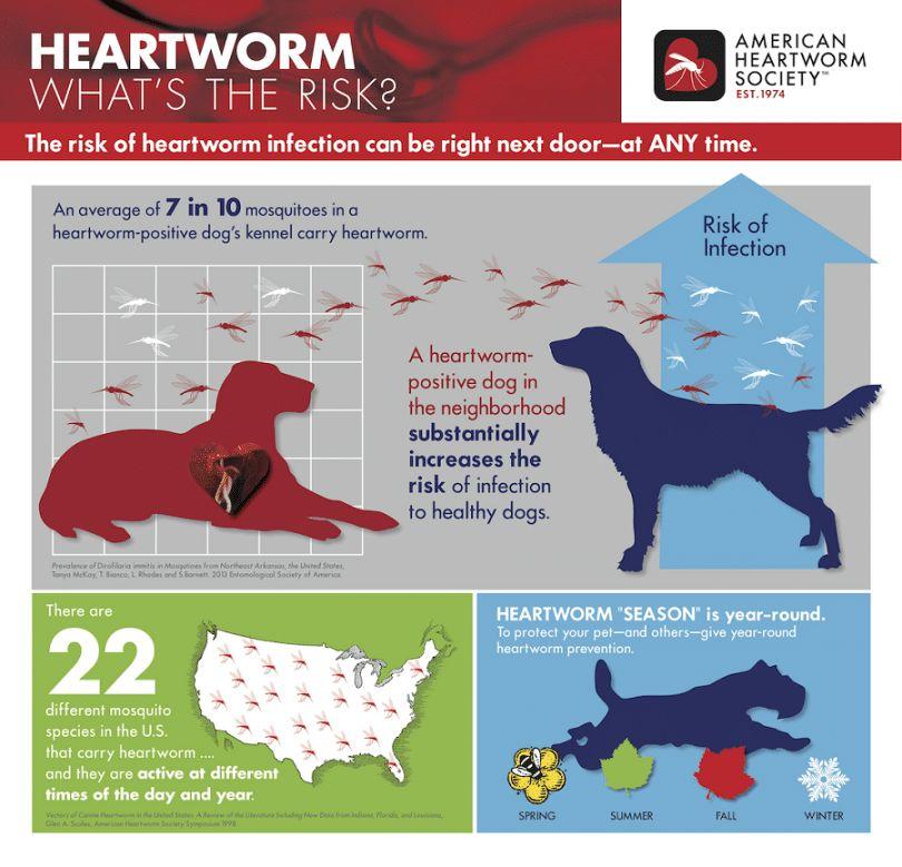 Heartworms chez les chiens: un guide complet pour les propriétaires concernés