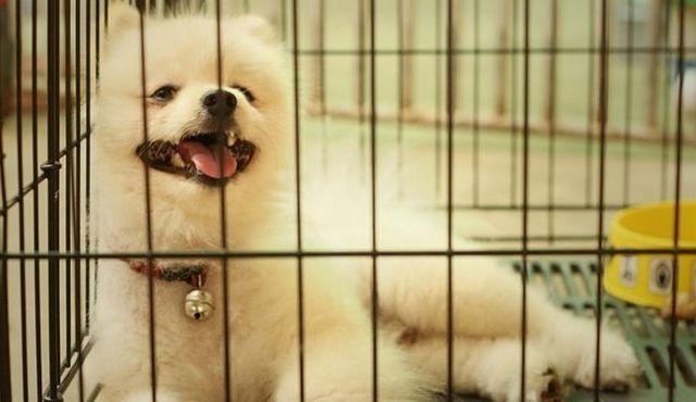 Aidez-moi! Mon chien pleure dans sa cage! Que devrais-je faire?