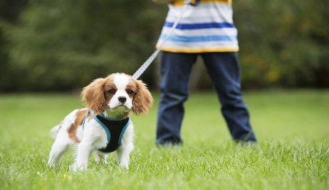 Aidez-moi! Mon chien tire en laisse sur nos promenades!