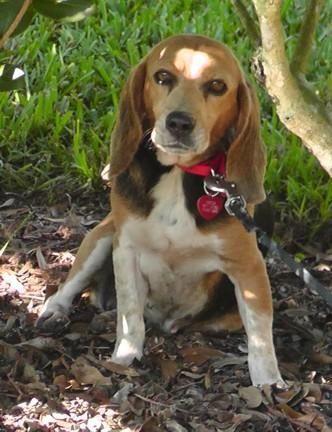 Aide ce best-seller de l`auteur à trouver son chien et obtenir un rôle dans son prochain livre!