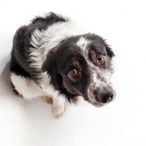 Aider un chien qui souffre d`anxiété de séparation