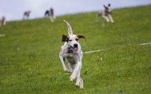 Formation à haute fréquence Comment utiliser Dog Whistles