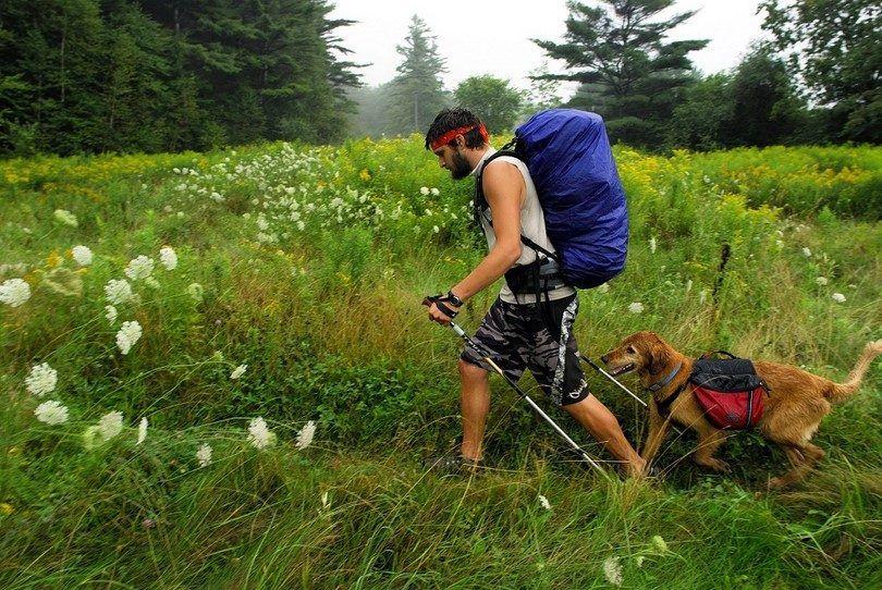 Randonnée avec les chiens: comment préparer buster pour une promenade plus longue