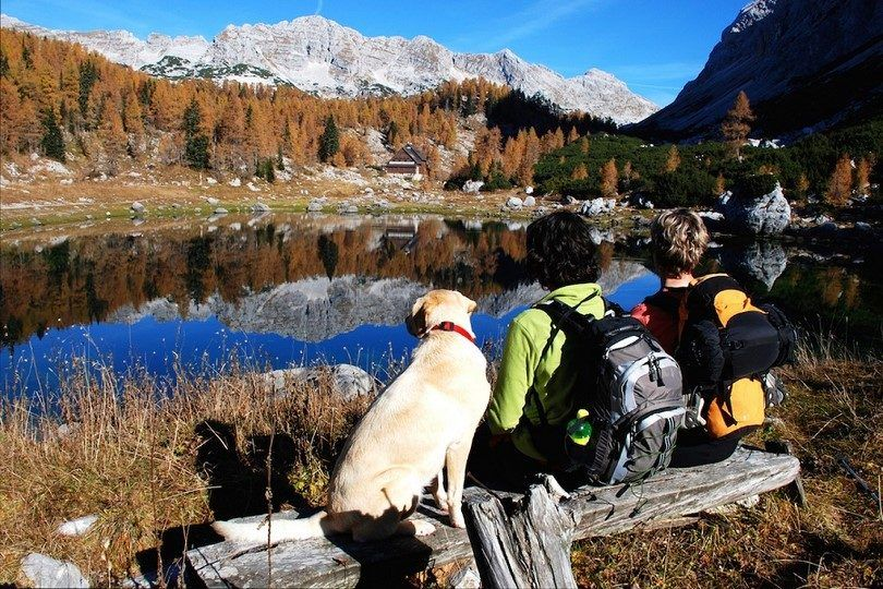 Chien montagnes randonnée lac