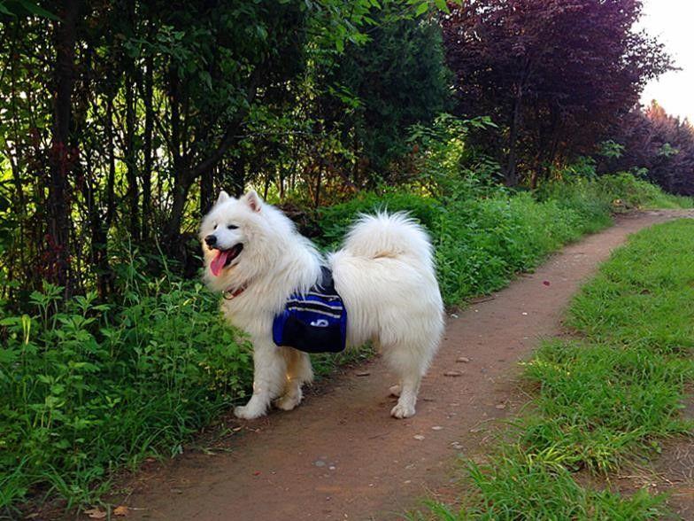 Sac à dos de chien dans la nature