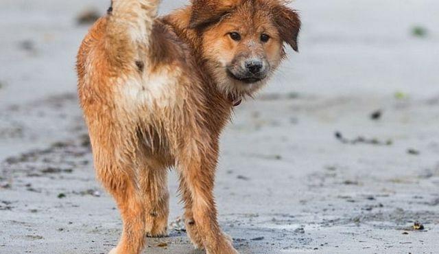 Hind fin faiblesse chez les chiens: ses causes et ses solutions
