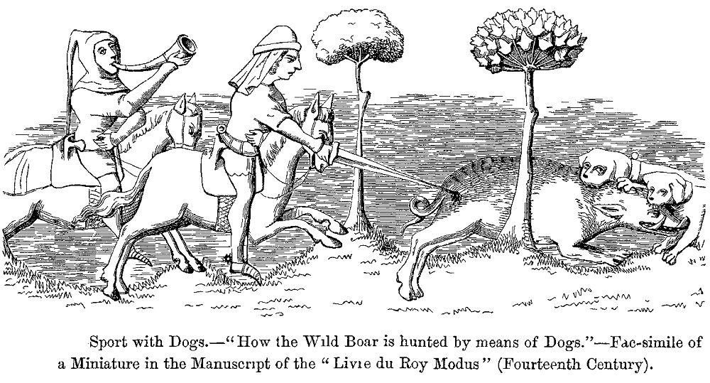 la chasse de porcs avec des chiens: ce que les débutants doivent savoir