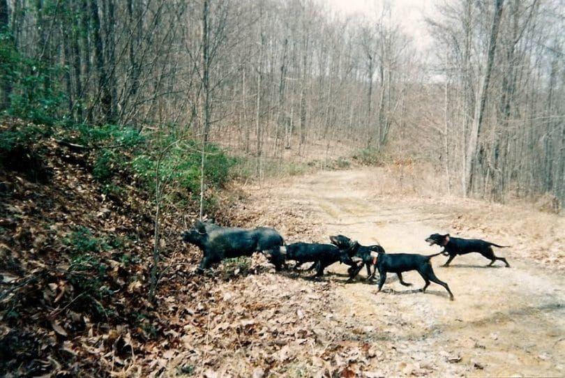 formation de chien de Catch