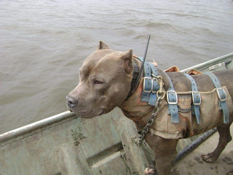Protégez votre chien