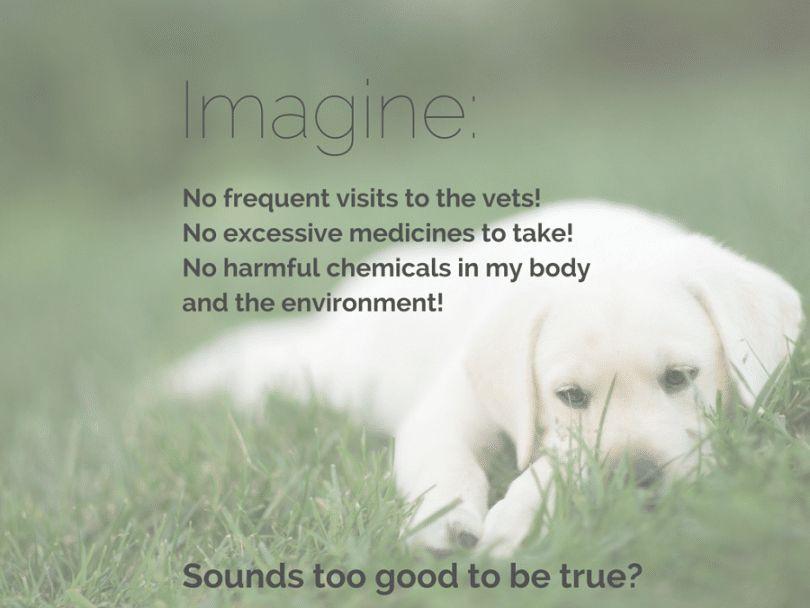 La médecine holistique pour les chiens: est-il fonctionne réellement?