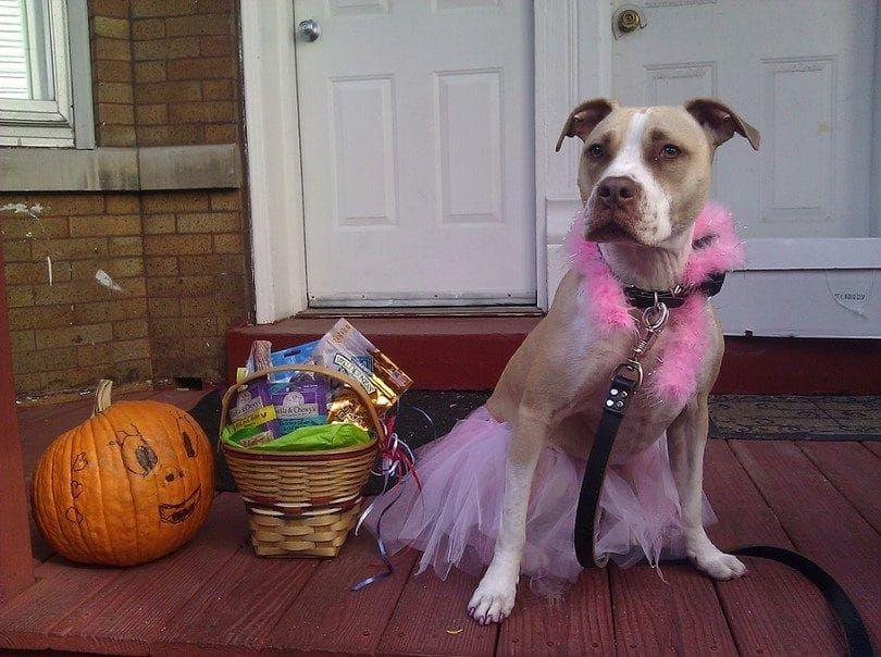 costume de ballerine pour chien