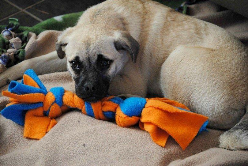 Puppy et maison jouet pour chien