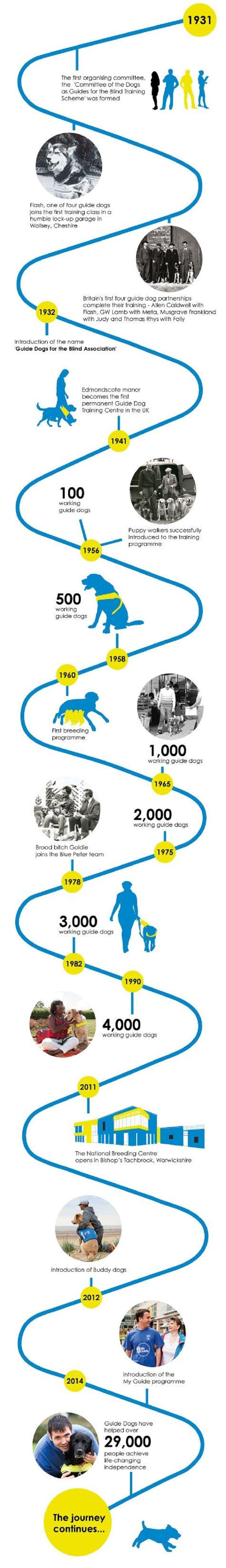 Guide chiens infographique