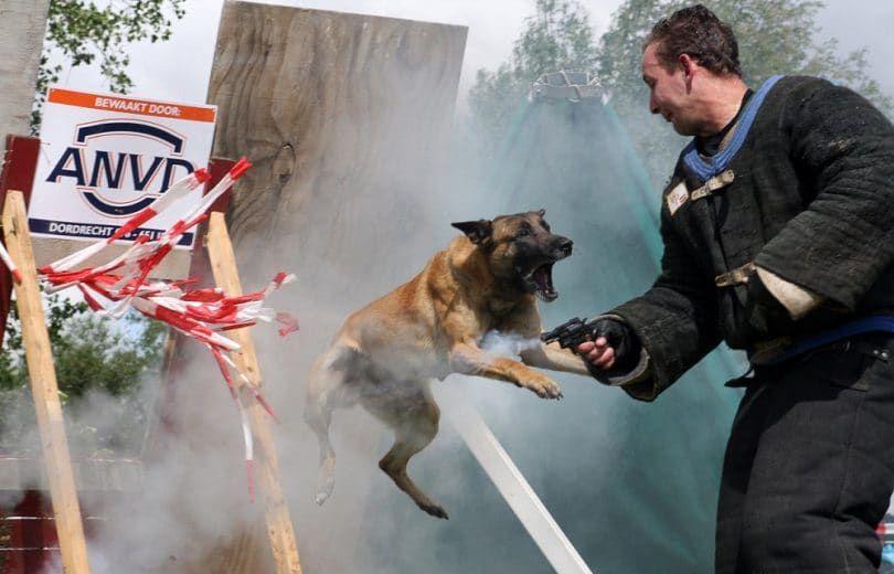 La police attaque de chien