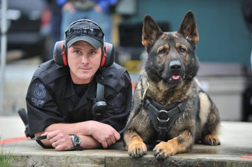Handler et un chien