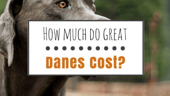 Combien dois-dogues coût?